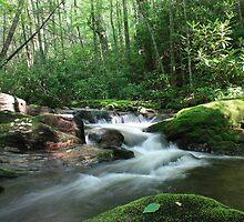 Mooney Creek by Patricia Adams