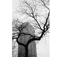 Architectural nature Photographic Print