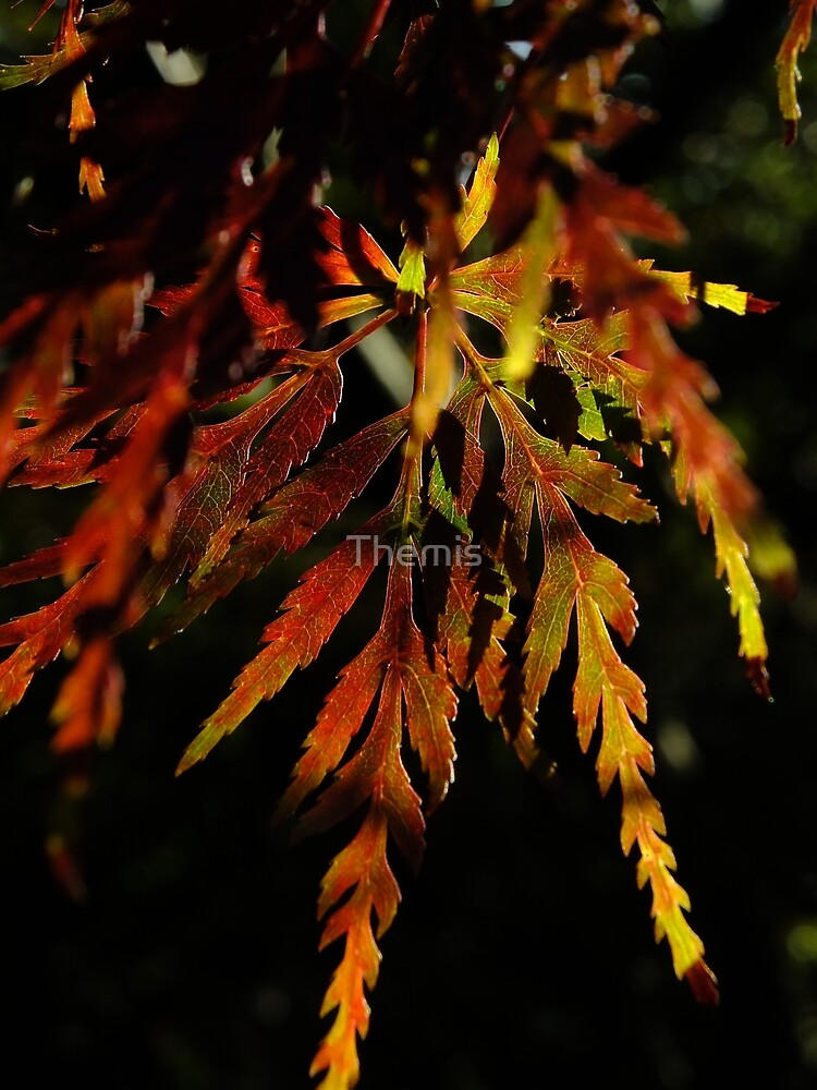 One pretty leaf in Autumn colours by Themis