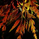 One pretty leaf in Autumn colours - iPhone by Themis