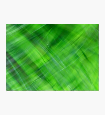 Green on Green Photographic Print