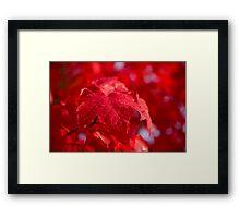 Autumn Dew Framed Print