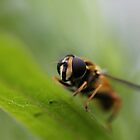 Hoverfly by cuprum