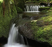 Mossy Rocks by Patricia Adams