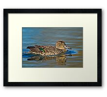 Displaying colours Framed Print