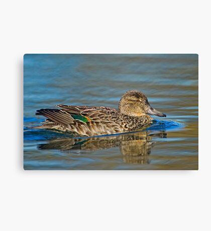 Displaying colours Canvas Print