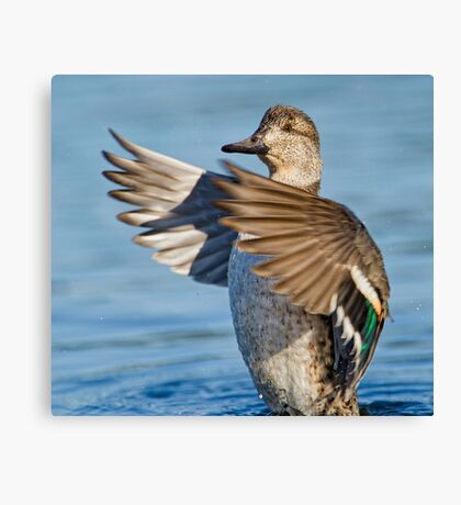 Flapping Female  Canvas Print