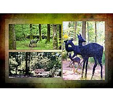 Beechenhurst sculptures Photographic Print