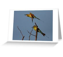 Sunset Bee-Eaters Greeting Card