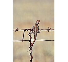 High Wire Act Photographic Print