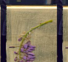 wisteria on gold Sticker