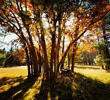 Autumn's Golden Rays  by Saija  Lehtonen