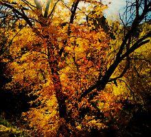Let the Sun Shine  by Saija  Lehtonen