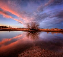 Shooting Pink by Bob Larson