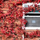October's Window by ShutterUp Photographics