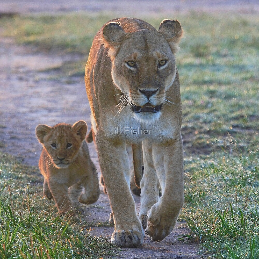 Following in Mother's Footsteps by Jill Fisher