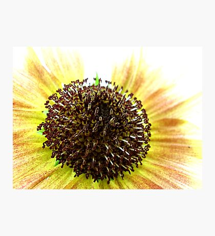 Red and Yellow Sunflower Center Photographic Print