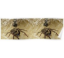 Spider (stereo image) Poster