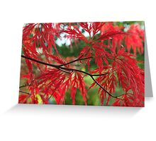 Red In The RAW Greeting Card