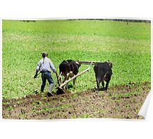 Using Oxen to Plow a Field Poster