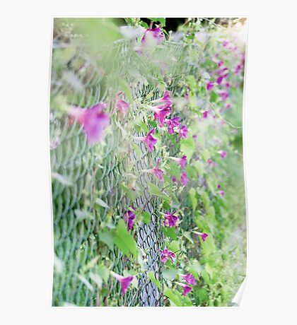 Fence Flowers Poster