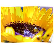 Shining Sunflower Poster
