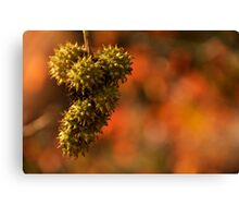 Autumn Bottle Brush Canvas Print