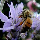 My Honey Bee by sandysartstudio