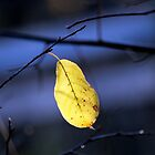 Yellow Leaf by Brian104