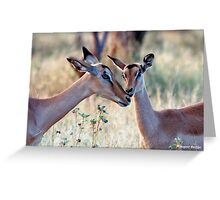 JUST A SMALL HUG? - BLACK-FACED IMPALA _Aepyceros melampus petersi Greeting Card