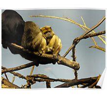 Monkey Huddle Poster