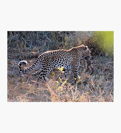 JUST A TINY BITE TO EAT ! - THE LEOPARD – Panthera pardus Photographic Print