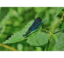 Veined Wings Photographic Print