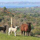 Glenshesk, Ballycastle by NiallMcC
