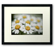 Daisy, Daisy, Daisy, Daisy Framed Print