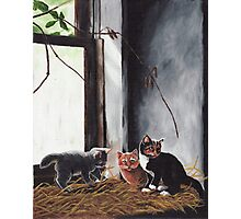 Kittens Playing Photographic Print