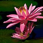 Red Waterlily by cclaude