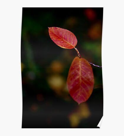 autumn dressed Poster