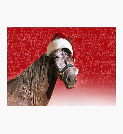 Ho-ho-ho Horse  Photographic Print