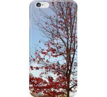 Rainbow & Tree... iPhone Case/Skin