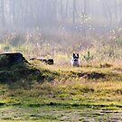 Biewer in the field by BrightBrownEyes