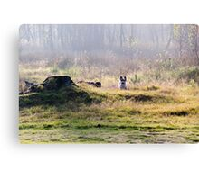 Biewer in the field Canvas Print