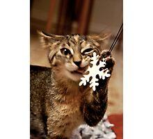 Cat Rescue Christmas 1 Photographic Print