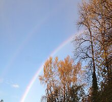 Rainbow & Trees2... by Photos55
