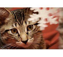 Cat Rescue Christmas 2 Photographic Print