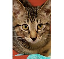 Cat Rescue Christmas 4 Photographic Print