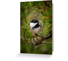 Black Capped Chickadee on Pine Greeting Card
