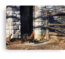 Landis Valley Rooster Canvas Print