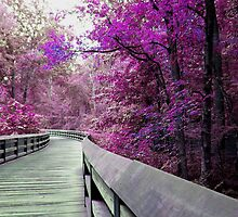 Boardwalk Through Candy Forest by Veronica Schultz