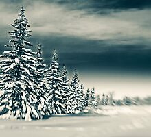 Winter Pines by Mike Moruzi